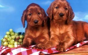 Fondo de pantalla perros tristes