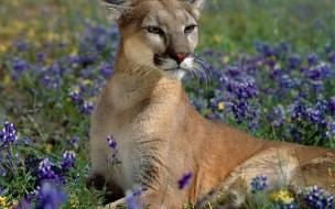 Fondo de pantalla leona en flores