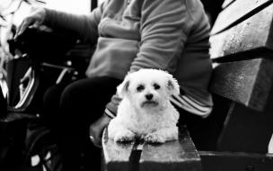 Fondo de perro sentado con su dueño