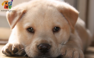 Fondo de pantalla perro bebe
