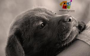 Fondo de pantalla perro consentido