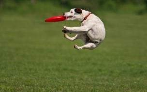 Fondo de pantalla perro entrenandose