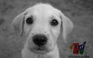 Fondo de pantalla perro blanco mirando