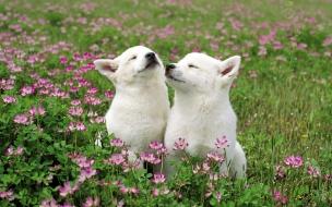 Fondo de pantalla perros cariñosos