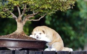 Fondo de pantalla perro junto a un arbol