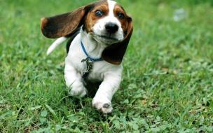 Fondo de pantalla perro corriendo