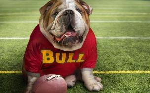 Fondo de pantalla perro deportista