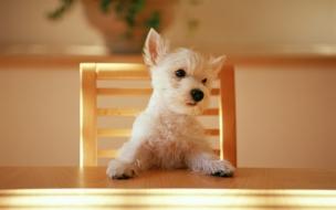 Fondo de pantalla perrito sentado en la mesa