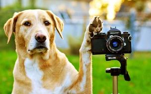 Fondo de pantalla perro camarografo