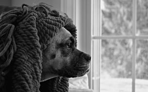 Fondo de pantalla perro travieso