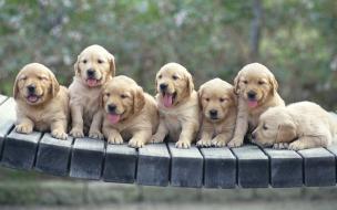 Fondo de pantalla hermosos perros