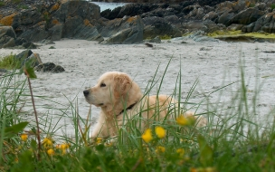 Fondo de pantalla perro solitario