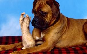 Fondo de pantalla perro viendo a un gato