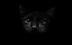 Fondo de pantalla cabeza de gato negro