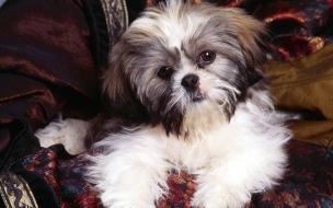 Fondo de pantalla perro esperando a su amo