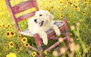 Fondo de pantalla perro acostado en una silla