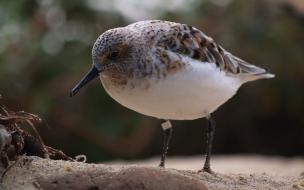 ave buscando comida