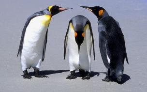 pinguinos jugando