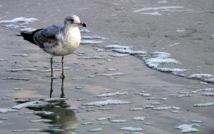 ave en la orilla de la playa