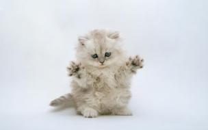 Fondo de pantalla gato haciendo asustar