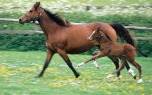 Yegua con su hijo