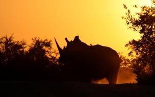 perfil de rinoceronte