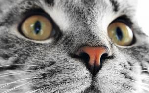 Fondo de pantalla cara de gato