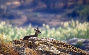 antilope bebe asustado
