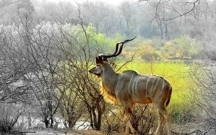 pintura de antilope
