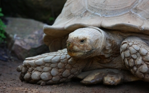 tortuga mirando