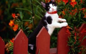 Fondo de pantalla gato en cerca
