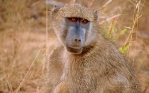 mono triste