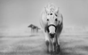 caballo blanco cansado