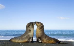 foquitas fuera del mar