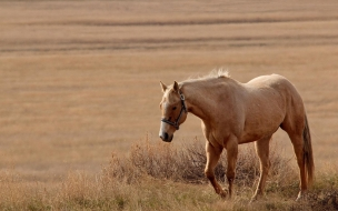 caballo hermoso caminando