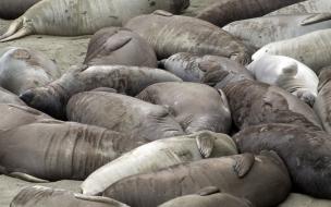 focas descansando