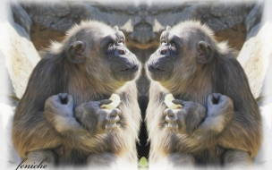 monos juguetones