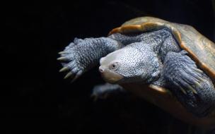 tortuga hermosa
