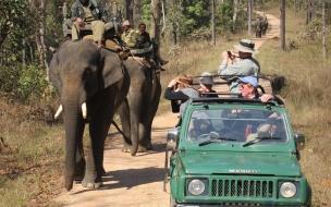 Turistas viendo elefantes