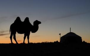 Hermoso camello