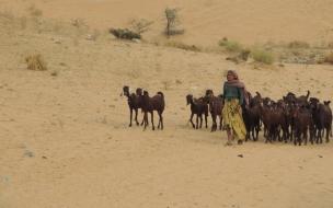 manada de chivos