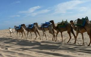 Expedicion de camellos