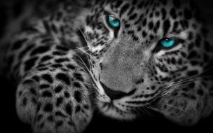 Fondo de pantalla leopardo ojos azules