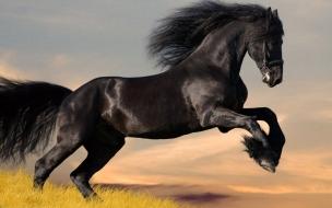 Hermoso caballo negro