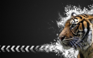 Fondo de pantalla tigre con fondo negro