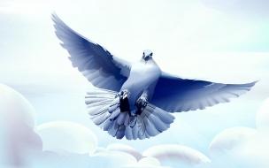 Hermosa pintura de paloma
