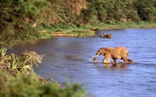 Elefante en rio