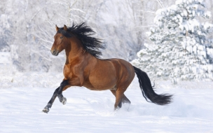 Caballo corriendo en nieve