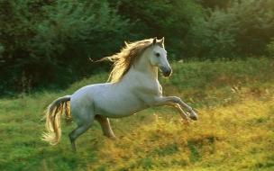 Fondo de caballo corriendo