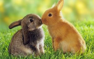 conejitos besandose
